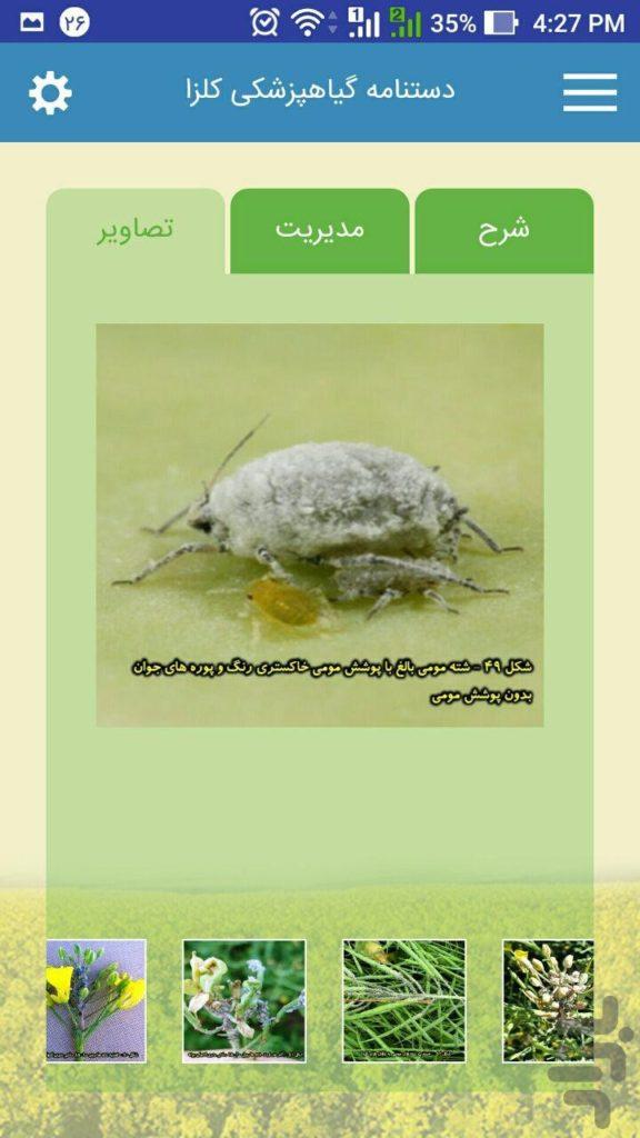 اپ اندروید دستنامه گیاهپزشکی کلزا   طراحی اپلیکیشن